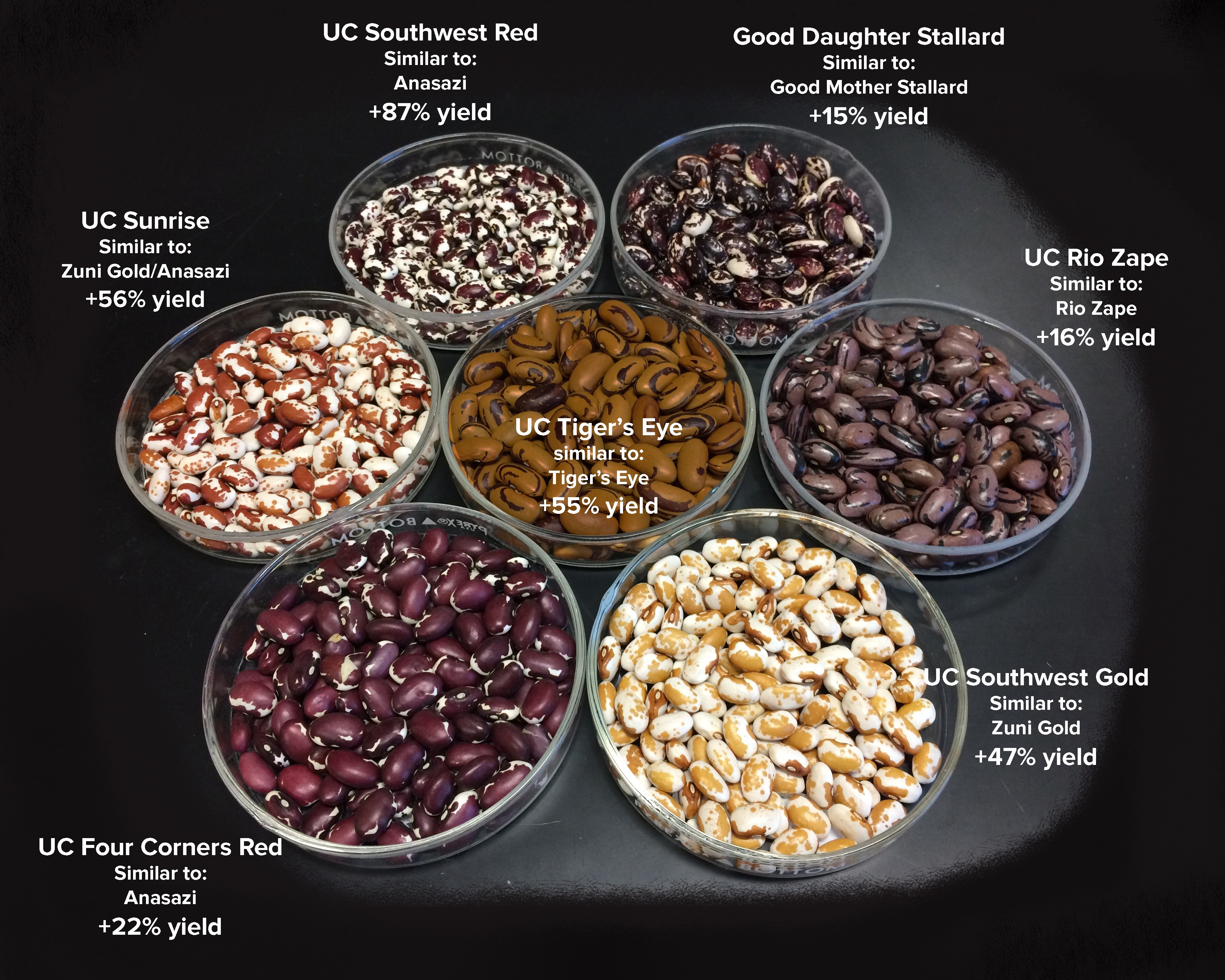 New bean varieties