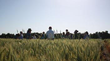 Students and Professor in Wheat Field