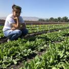 Samantha Hilborn in spinach field